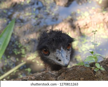 scared ostrich burying head in sand near standing blank wooden signboard -ostrich bird head and neck close up on blue sky background