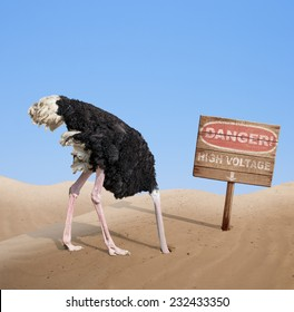 scared-ostrich-burying-head-sand-260nw-2