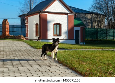 Scared puppy escaped from the owner - Shutterstock ID 1455091163