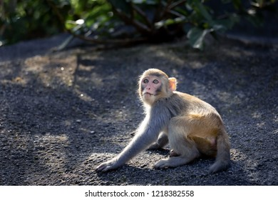 Scared small monkey