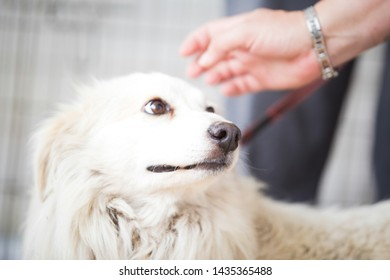 Scared white dog .Adopt a pet