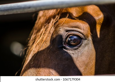 Scared young horse