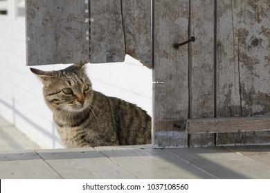 scaredy cat hiding