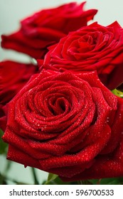 Scarlet fresh roses with dewdrops on petals
