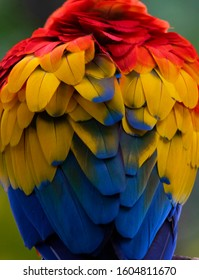 Scarlet Macaw (Ara macao) in the colombian forest