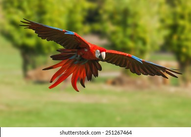 Scarlet Macaw Images, Stock Photos & Vectors | Shutterstock