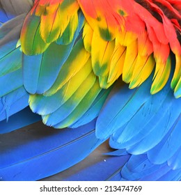 Scarlet Macaw feathers background texture