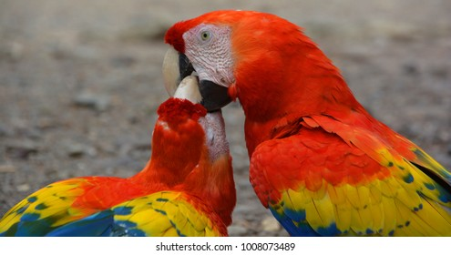 Macaw Calls Images, Stock Photos & Vectors | Shutterstock