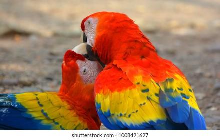 Macaw Calls Images, Stock Photos & Vectors | Shutterstock