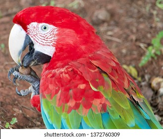 Macaw Eating Images, Stock Photos & Vectors | Shutterstock