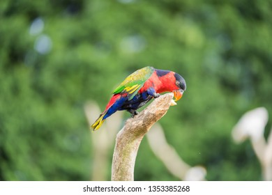 Scarlet Macaw Parrot from tropical south America