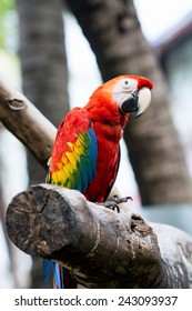 Scarlet macaw sitting on log.