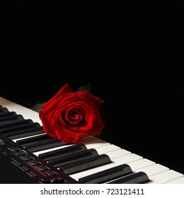 Scarlet rose on the keys of the digital piano on a black background
