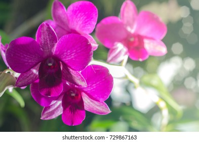Scarlet violet flower Phalaenopsis orchids over bokeh background with sun flare