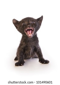 Scary black kitten isolated on white background