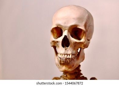 Scary cheerful smiling toothy jaws and human skull. - Shutterstock ID 1544067872