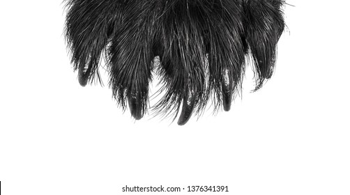 scary claws of an animal monster and werewolf on a white isolated background