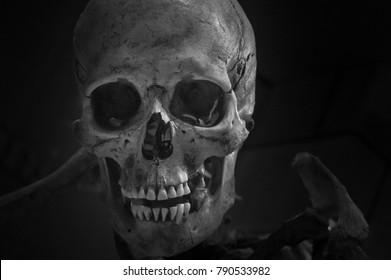 Scary creepy skull looking at you!