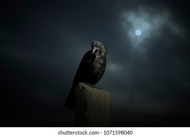 Scary crow in an overcast full moon night
