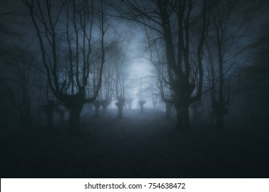 scary dark forest with creepy trees
