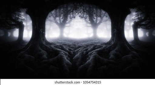 Scary dark forest with tree roots. Symmetry effect