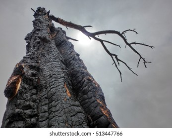 Scary dead burned tree against cloudy sky