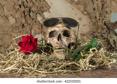 Scary dimly lit human skull laying on the log background