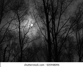 Scary Forest on a moonlit night