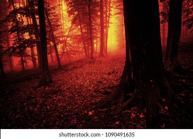 scary forest scene, nightmare atmosphere