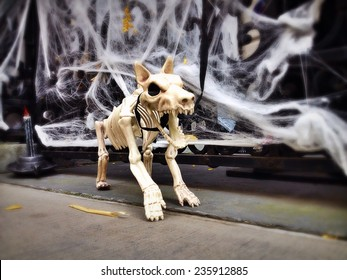 Scary Halloween dog skeleton outside in New York City with Instagram effect filter.