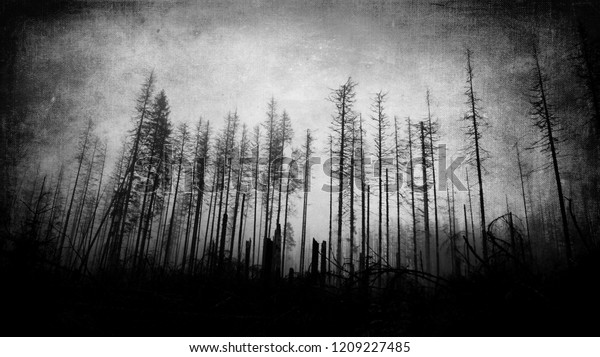 Scary Horror Forest Wallpaper Dark Spooky Royalty Free