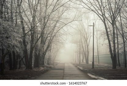 Scary landscape with fog in an industrial area. Old concrete road lead through mystical woods. Cold winter atmoshpere.