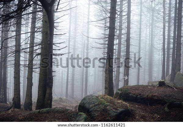 A Scary Mist Forest