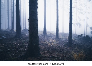 A scary mist forest in the Harz mountains
