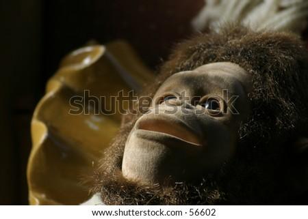 Scary Monkey Stock Photo Edit Now 56602