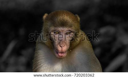 Scary Monkey Stock Photo Edit Now 720203362