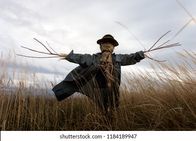 Scary scarecrow in a hat on a cornfield in cloudy sky background. Halloween holiday concept