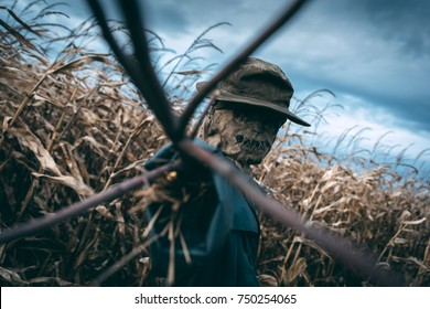 Scary scarecrow in a hat on a cornfield in cloudy weather. Halloween concept