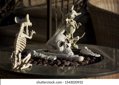Scary skull and rat skeleton Halloween decorations on the front porch of someone's home in Hermosa Beach, California.