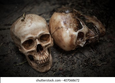 scary skulls on dirty soil.