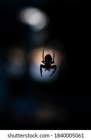 Scary spider silhouette with black background and orange lights. Halloween mood