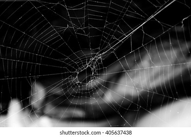 scary spider web on a black background