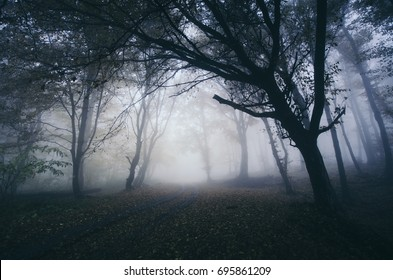 scary tree on forest road, halloween night landscape background
