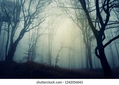 scary trees in mysterious forest