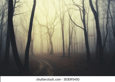 scary twisted trees in forest at sunset