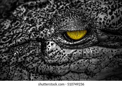 Scary yellow evil eye of crocodile