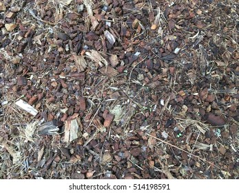 Scattered coconut shell