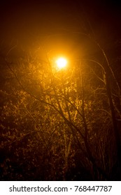 Scattered light from a street lamp at night during a thick fog