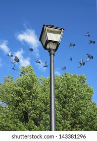 Scattering of pigeons and lantern on green meadow