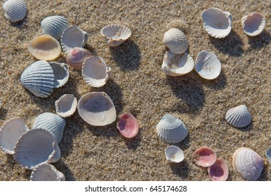 Scattering of seashells on the sandy beach of the Baltic sea